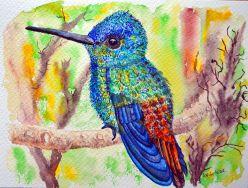 Kolibri in schillernden Farben -  Aquarell