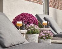 Degustation: Chrysanthemenbier, Likör, Bonbons und Wurst