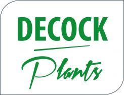 DECOCK PLANTS SPRL/BVBA