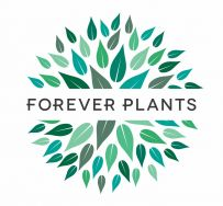 Forever Plants Group - Air so Pure