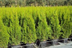 Geert Bogaert Plantenkwekerij