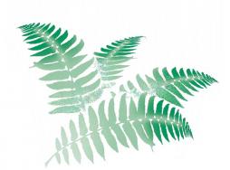 Kleo Montforts Pflanzenhandel