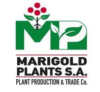 Marigold Plants SA