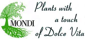 Mondi Plants di Edi Ejlli