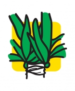 Potplantenkwekerij Sjaloom BV