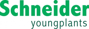 Schneider youngplants
