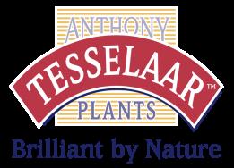 Tesselaar Plants