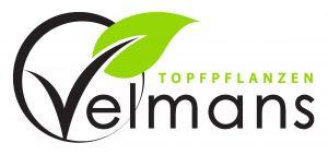 Topfpflanzen Velmans Stephan Velmans