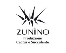 Zunino Cactus