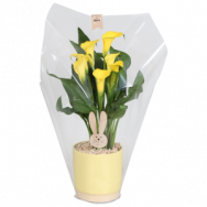 #SoHappyCalla with gift packaging