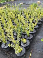 Abdeckung mit oder ohne Wasserreservoir für Gartenbau und Aufforstung