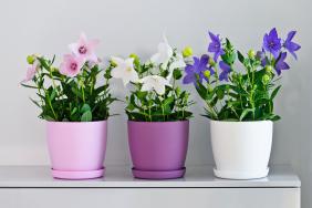 Aga Mat Flowerpot