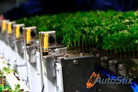 AutoStix - automatic cutting transplanting