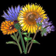 Bio-Bienenweide