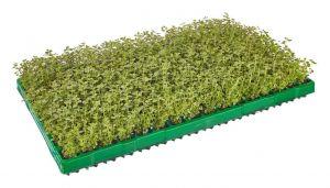 Bio-Stecklinge für eine nachhaltigere Kräuter-Produktion