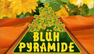 Blühpyramiden- Blütensträucherinnovation