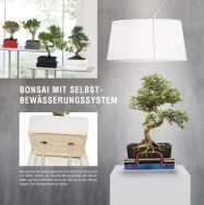Bonsai with Selfwatering-System