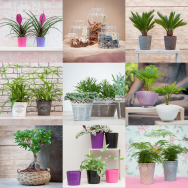 Decoration products