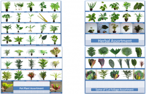 Exporters of Herbal plants, Ornamental Plants and Decorative Cut foliage