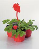 Gourmet-Trio Erdbeeren