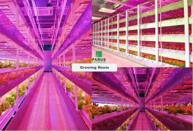 Greenhouse &Multi-layer Plant Factory System