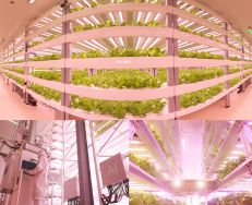 High tech horticulture lighting and Plant factory solution provider