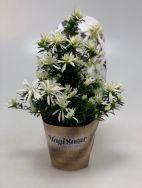 Hortinno® Magisnow 'Winter Beauty'®