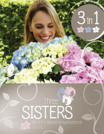 Drei Schwestern in Harmonie: Hydrangea Three Sisters