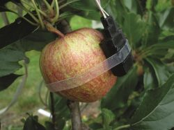 ICT for supporting water efficiency in orchards