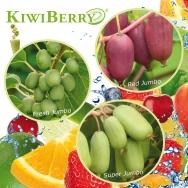 KiwiBerry - Neue Mini-Kiwi