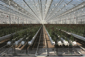 Cultivation gutters