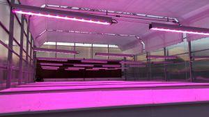 LED Beleuchtungsanlagen für Pflanzenwachstum