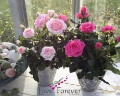 Love Fragrance Forever® - pot roses on own roots