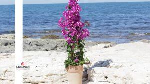 Mediterranen Pflanzen
