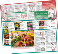 Planting and care tips as flyer or outdoor large-format board