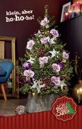 Picea Little Santa - Der Baum für jeden Raum