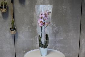 Plant sleeve Orchid Diesel