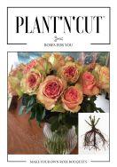 Plant'n'cut™ - Gartenrosen