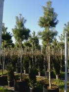 Pflanzen im air-pot®