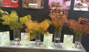 Pot plants, Foliage, Cutflower and Garden plants