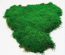 Preserved flat moss .