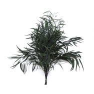preserved plants - nicoly