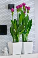 Rattan Flowerpot