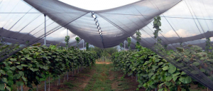 Shade & protection nets