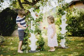 SISSI STRAWBERRY - der weltweit erste Erdbeerbaum