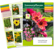 New summer- and bucket plant brochure