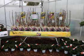 Sonnengarten - Pflanzenvielfalt für sonnige Standorte