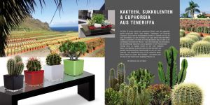 PRICKLY LOVE FROM TENERIFE - Crassula, Euphorbia, Cacti and Suculents