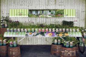 Staudenaktion 'Das beste aus Oma's Garten'