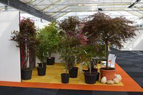 Summer Booth at Plantarium (Boskoop)